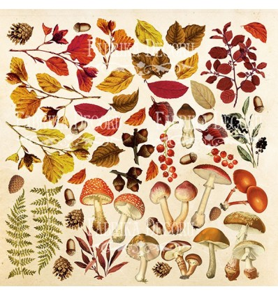 "Sheet of images for cutting. Collection ""Botany autumn"""